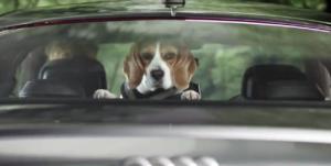 Audi Service Changes Dog